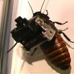 cockroachcamera